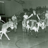 donkey_basketball_1971_72_tn.jpg